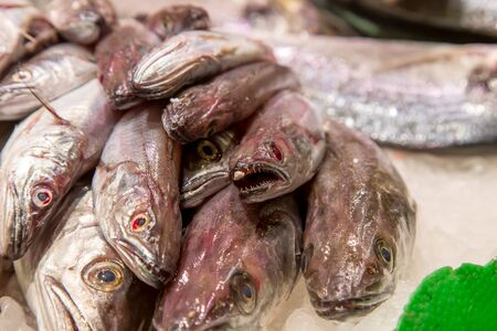 Fresh sea fish in ice on mercat de la boqueria Barcelona, Spain Stock Photo