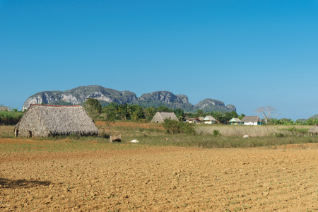 pinar: Tobacco field and drying house in Vinales, Cuba Stock Photo