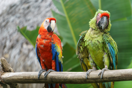 tropical parrots in nature 写真素材
