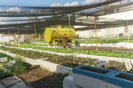 Organic urban orchard in Cuba.