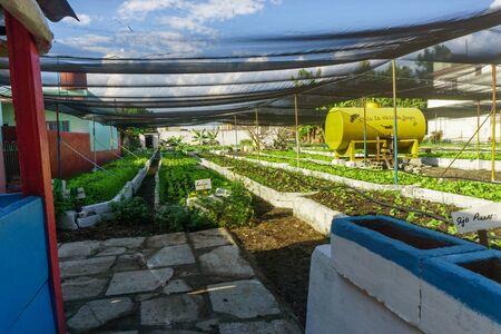 Santa Clara, Cuba, January 05, 2017: Organic urban orchard in Cuba.