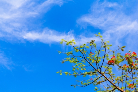 tree and blue sky in thailand photo