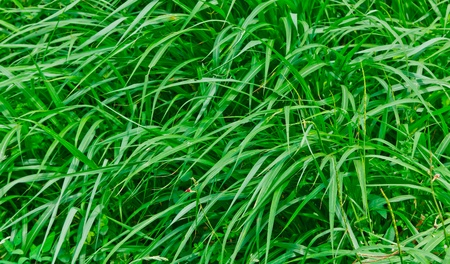 The clump of green grass Stock Photo