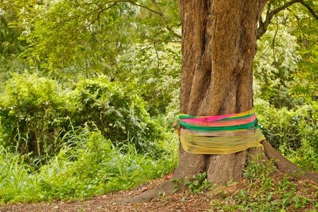 miracle tree: The sacred tree in the jungle