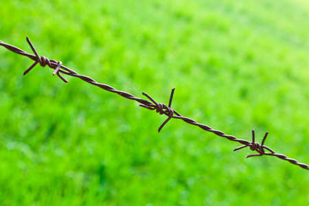 The old rusty barbed wire with the green field background photo