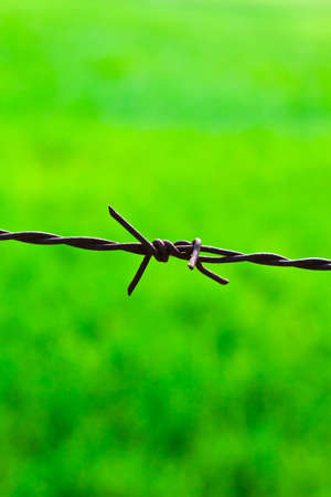 The closeup image of the sharp barbed wire photo