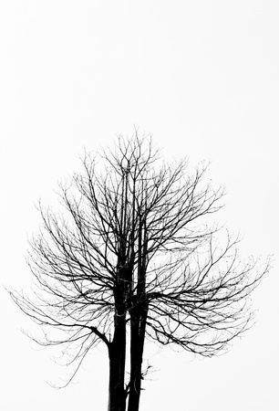 L'image silhouette d'un arbre avec le fond blanc