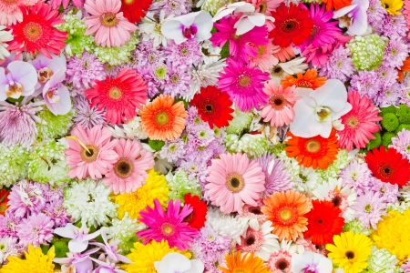 mixed colors: The background image of the colorful flowers