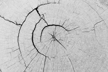 The black and white background image of the pattern of the cracked annual ring of a big tree Stock Photo