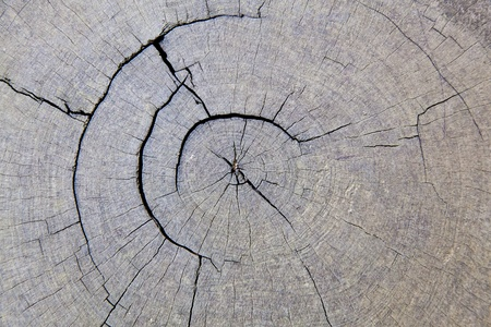 The background image of the pattern of the cracked annual ring of a big tree Banque d'images