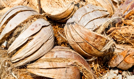 The closeup image of the pile of abandoned coconut shells