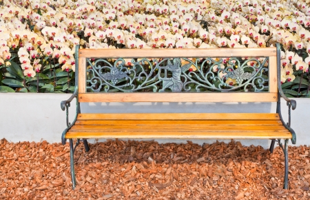 A wooden bench and the white Phalaenopsis Banque d'images