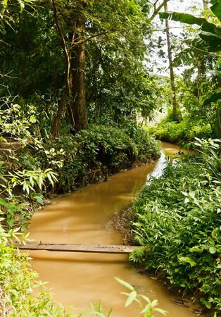 The natural stream in the countryside of Thailand
