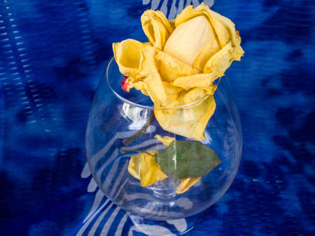 memoir: Yellow rose in the glass. Blue background