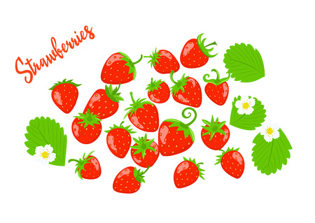 Strawberry vector with leaves and flowers. Set of berries on a white background.