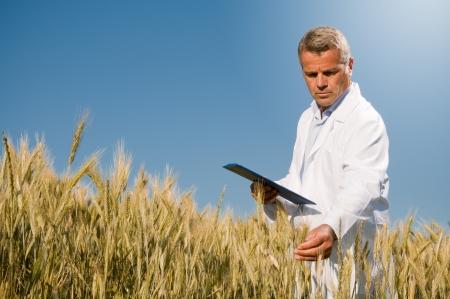 control de calidad: T�cnico maduro de celebraci�n y examinar un o�do de trigo durante un control de calidad en el campo