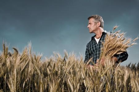 Volwassen landbouwer op zoek met tevredenheid bij zijn ontgonnen veld met een bos van rijpe tarwe na een werk dag onder een dramatische hemel