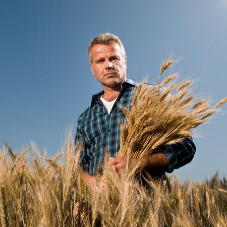 wheat harvest: Soddisfatti agricoltore maturo, guardando alla fotocamera dopo una giornata di lavoro con un sacco di grano maturo