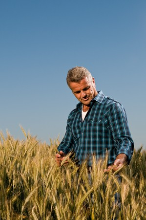touch down: Satisfied mature farmer touching with care his ripe wheat field before the harvest, vertical copy space