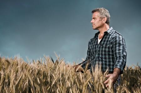 jornada de trabajo: Maduro agricultor mirando con satisfacci�n en su campo cultivado y teniendo cuidado de trigo despu�s de un d�a de trabajo, cielo dram�tico