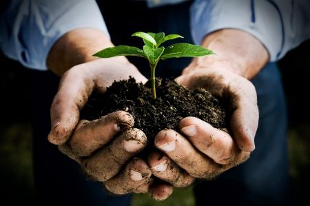 農家: 新鮮な若い植物を持っている農夫の手。新しい生活と環境保全のシンボル