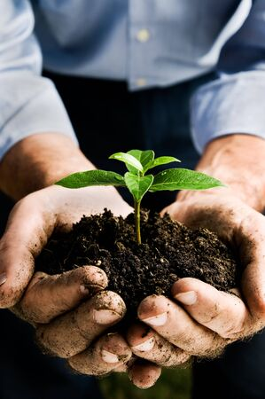 small plant: Farmer hand holding a fresh young plant. Symbol of new life and environmental conservation. Space for text