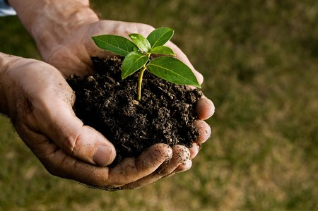 soil conservation: Farmer hand holding a fresh young plant. Symbol of new life and environmental conservation. Space for text