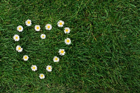 Heart shape of daisy in a meadow. Symbol of love for the nature and the environment. photo