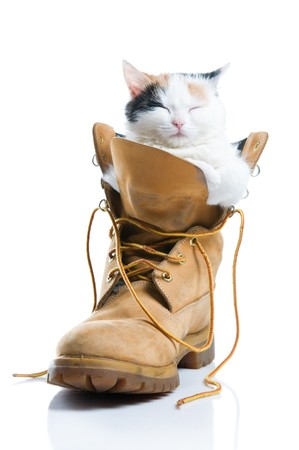 Adorable little kitten sleeping inside a boot isolated on white background photo