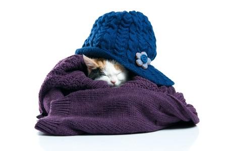 Adorable little kitten sleeping inside warm wool jumper isolated on white background photo
