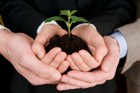 small plant: Group of business hands holding a fresh young sprout. Symbol of growing and green business