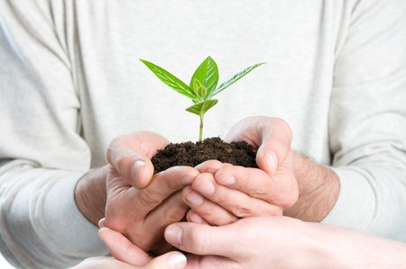 growing success: Group of hands holding a fresh green sprout, symbol of growing business, environmental conservation and bank savings. Stock Photo