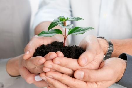 Business team die samen een frisse groene spruit close-up Stockfoto