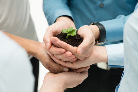 plant: Closeup Of Businesspeople Hand Holding Plant Together