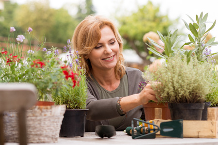 gardening: Portrait Of Happy Mature Arranging Potted Plants Stock Photo