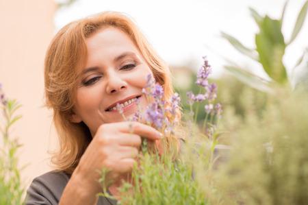 smell: Retrato De Mujer madura jardinero Smell The Lavender Foto de archivo
