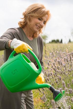 handglove: Female Mature Gardener Watering Plants In Field