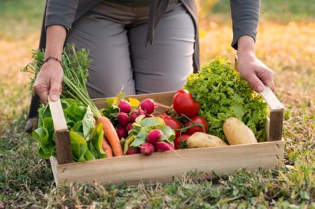 verduras: Cerca de la mujer Holding Crate Con Vegetales Foto de archivo