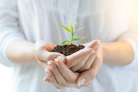 Close-up shot van een vrouw met een groene plant in de palm van haar hand. Close-up hand die aa jonge verse spruit. Ondiepe scherptediepte met focus op zaailing.