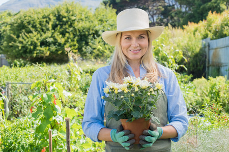 beautiful mature woman: Beautiful mature woman gardening in her garden. Portrait of smiling senior woman holding flower plant in garden and looking at camera. Woman holding potted plant. Stock Photo