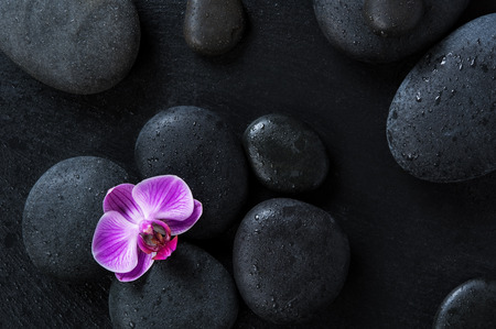 Top view of black massage stones on blackboard with single purple orchid. High angle view of pink orchid flower on wet hot stones therapy. Lastone treatment and luxury spa concept.
