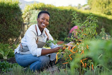 Portret van een volwassen vrouw die groente plukt uit de achtertuin. Vrolijke zwarte vrouw die haar planten in de moestuin verzorgt terwijl ze naar de camera kijkt. Trotse Afro-Amerikaanse boer die groenten oogst in een mand.