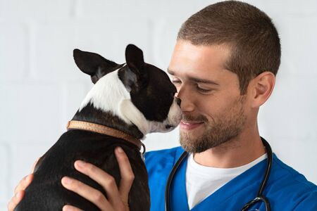 Young vet playing with boston terrier at clinic. Smiling veterinarian with stethoscope loving little dog in hospital after checkup. Cute puppy lick the vets nose, pet care. 写真素材
