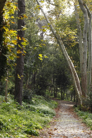 wooded path: wooded path