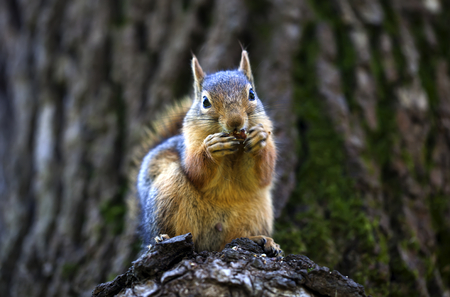 the color image: daylight photographed on tree eating squirrel, color image
