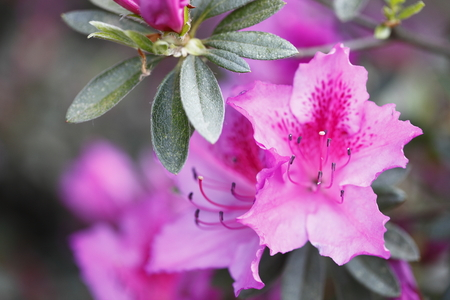 the color image: macro photographed in daylight pink flowers, color image Stock Photo