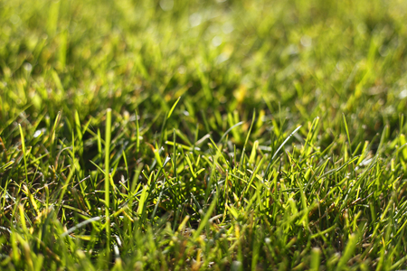 daylight: photographed in daylight grass macro background image
