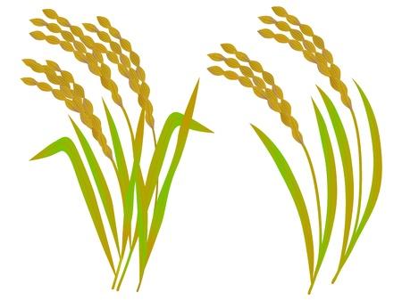 쌀의 그림