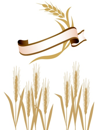 Wheat ribbon  Vector