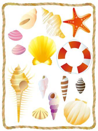 貝の身で白い背景のイラスト集